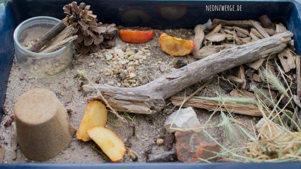 KInder Natur - Insekten entdecken - Käfer und Feuerwanzen züchten - Terrabox