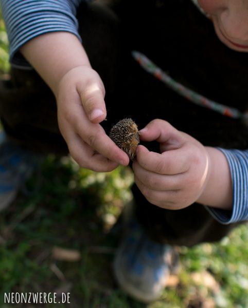 Mit Kindern in der Stadt -Stadtleben - Igel- Natur Kinder