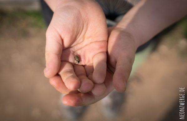 Mit Kindern in der Stadt -Stadtleben - Marienkäfer Insekten - Natur Kinder