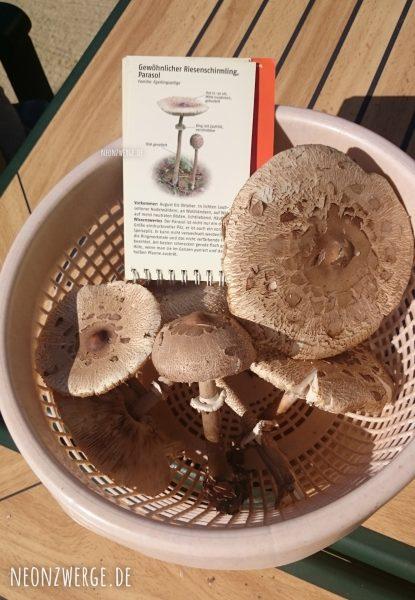 Parasol - Riesenschirmling - Pilze sammeln mit Kindern
