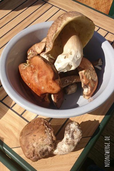 Pilze sammeln mit Kindern - Herbst Röhrlinge